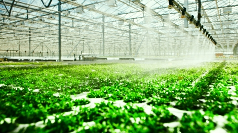 Watering system: Gtfour via Shutterstock.