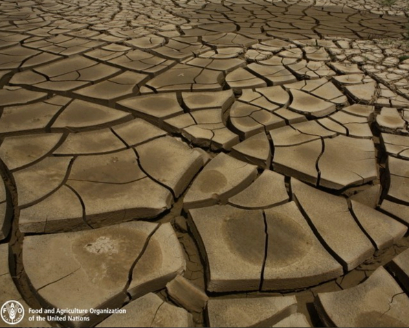 Soil degradation and drought. Image via UNFAO.
