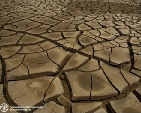 Soil degradation and drought. Image via UNFAO.
