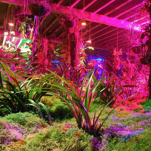 LED-Grow-Light-Garden