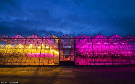 Greenhouse LEDs