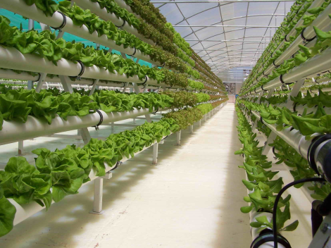 Hydroponics allows for high crop densities, and so-called vertical farming. Image rights