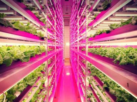 vertical LED farm