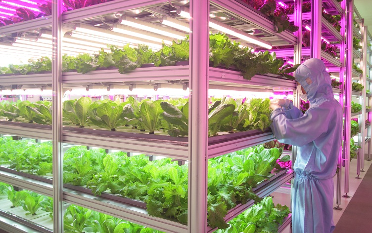 vertical LED farm2