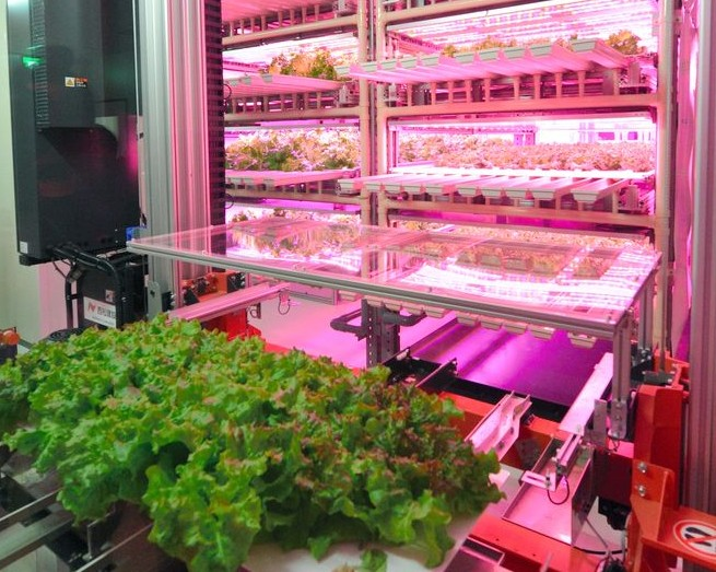 vertical LED farm3